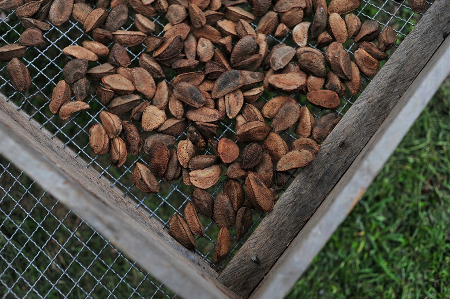 авокадо снижает холестерин